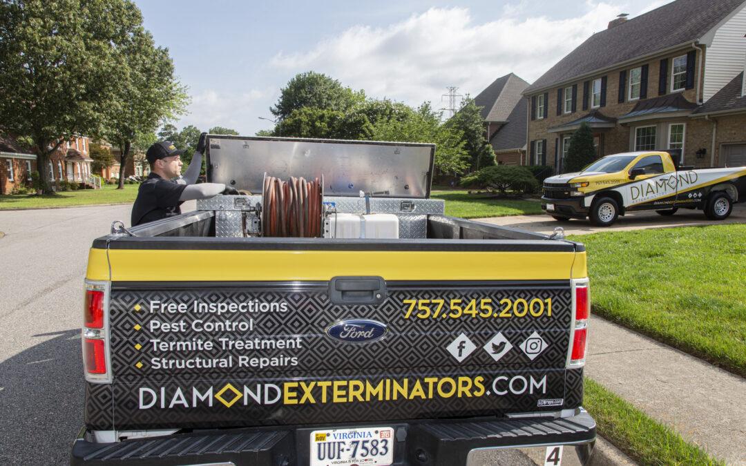 SEO Case Study: Diamond Exterminators in Chesapeake, Virginia
